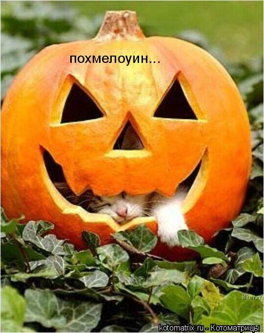 Котоматрица: похмелоуин...