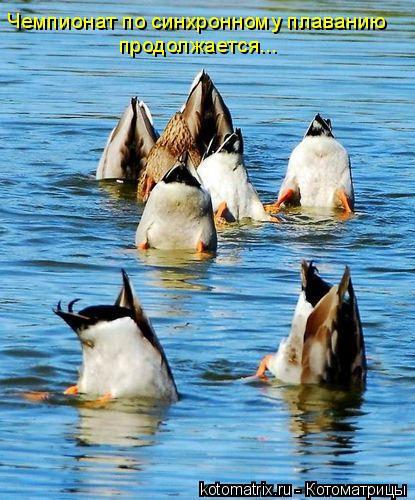 Котоматрица: Чемпионат по синхронному плаванию продолжается...
