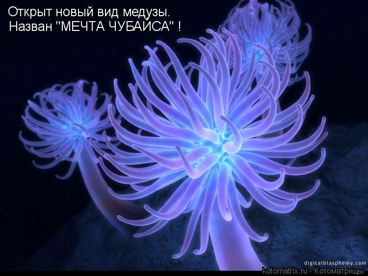 """Котоматрица: Открыт новый вид медузы. Назван """"МЕЧТА ЧУБАЙСА"""" !"""