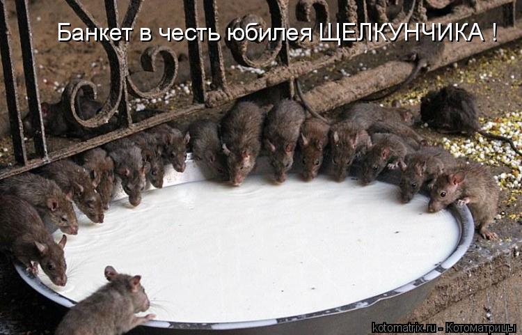 Котоматрица: Банкет в честь юбилея ЩЕЛКУНЧИКА !