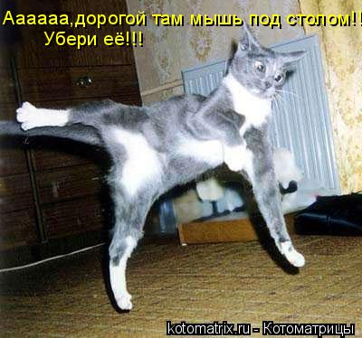 Котоматрица: Аааааа,дорогой там мышь под столом!!!! Убери её!!!