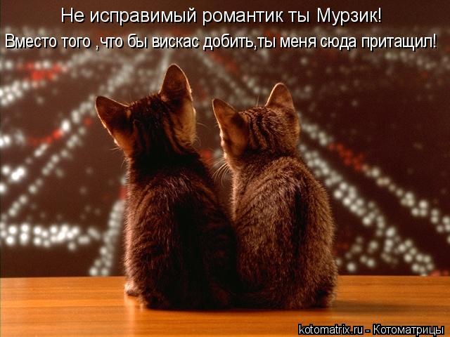 Котоматрица: Не исправимый романтик ты Мурзик! Вместо того ,что бы вискас добить,ты меня сюда притащил!