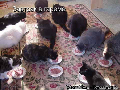 Котоматрица: Завтрак в гареме