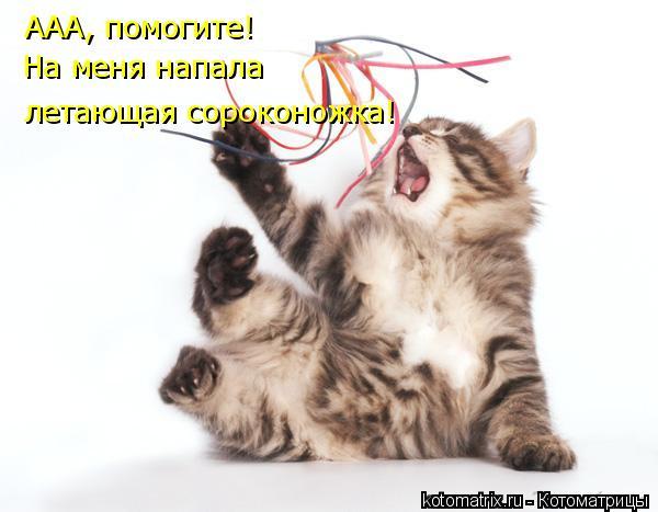 Котоматрица: ААА, помогите! На меня напала летающая сороконожка!