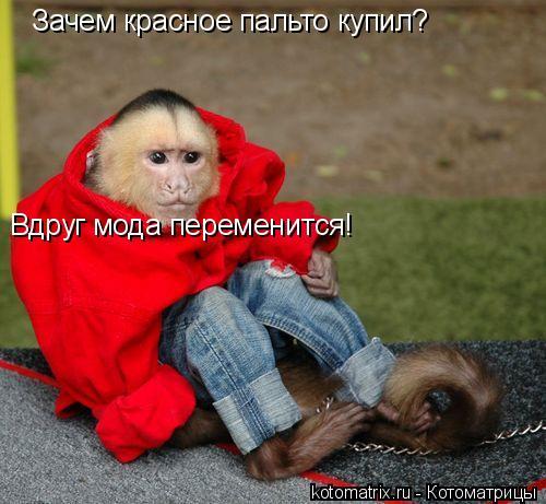 Котоматрица: Зачем красное пальто купил? Вдруг мода переменится!