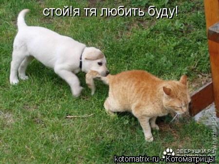 Котоматрица: стой!я тя любить буду!