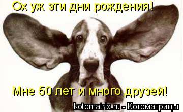 Котоматрица: Ох уж эти дни рождения! Мне 50 лет и много друзей!