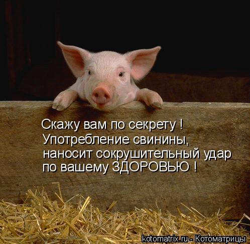 Котоматрица: Скажу вам по секрету ! Употребление свинины, наносит сокрушительный удар по вашему ЗДОРОВЬЮ !