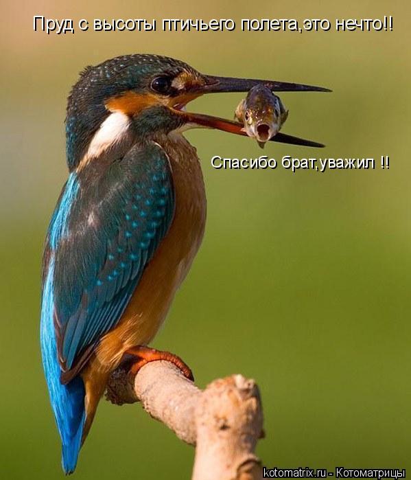 Котоматрица: Спасибо брат,уважил !! Пруд с высоты птичьего полета,это нечто!!