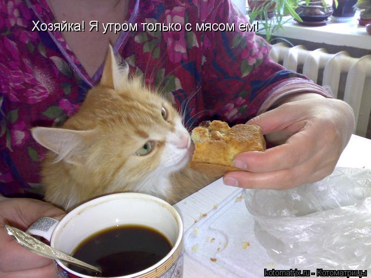 Котоматрица: Хозяйка! Я утром только с мясом ем!
