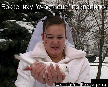 """Котоматрица: Во жениху """"счастьеце"""" привалило!!"""