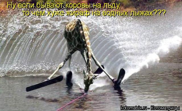 Котоматрица: Ну если бывают коровы на льду,  то чем хуже жираф на водных лыжах???