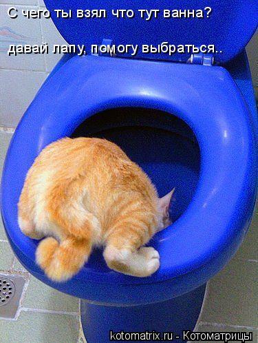Котоматрица: С чего ты взял что тут ванна? давай лапу, помогу выбраться..