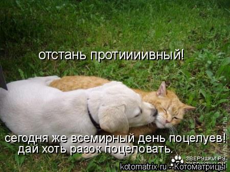 Котоматрица: отстань протиииивный! сегодня же всемирный день поцелуев! дай хоть разок поцеловать.