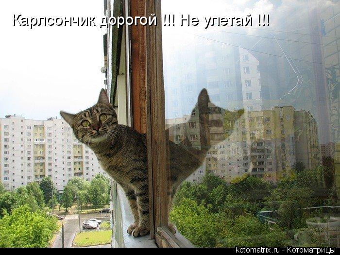 Котоматрица: Карлсончик дорогой !!! Не улетай !!!