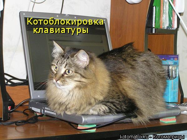 Котоматрица: Котоблокировка клавиатуры