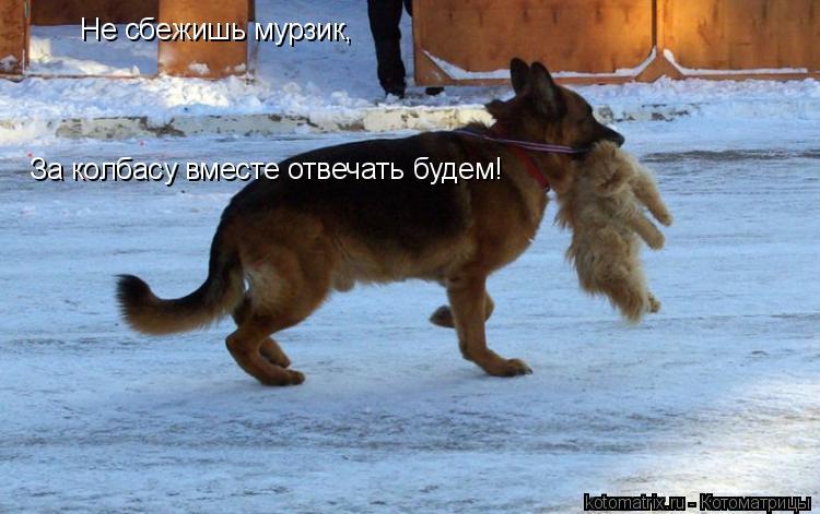 Котоматрица: Не сбежишь мурзик, За колбасу вместе отвечать будем!