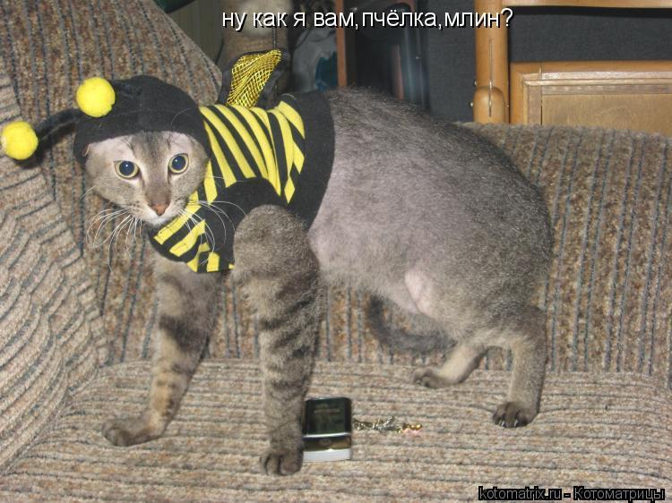 Котоматрица: ну как я вам,пчёлка,млин?