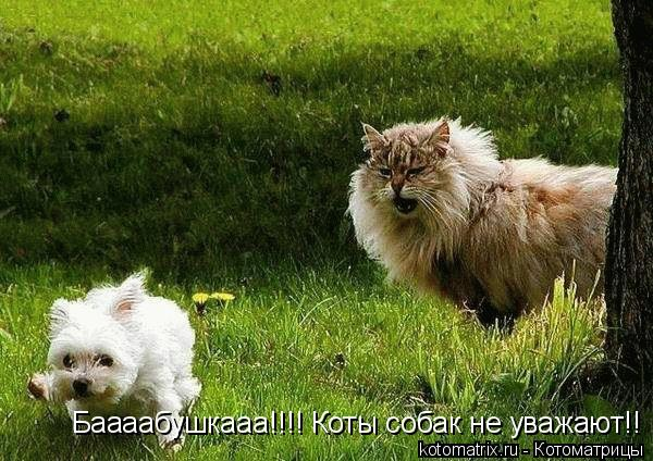 Котоматрица: Баааабушкааа!!!! Коты собак не уважают!!