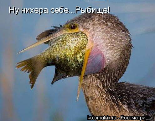 Котоматрица: Ну нихера себе...Рыбище!