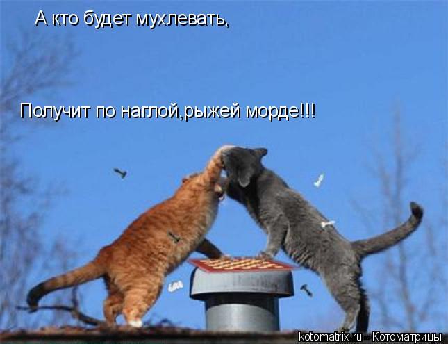 Котоматрица: А кто будет мухлевать, Получит по наглой,рыжей морде!!!