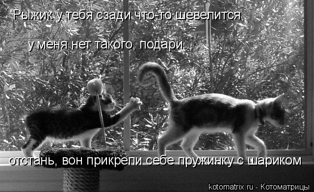 Котоматрица: Рыжик у тебя сзади что-то шевелится у меня нет такого, подари... отстань, вон прикрепи себе пружинку с шариком