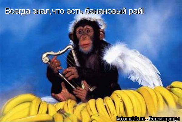 Котоматрица: Всегда знал,что есть банановый рай!