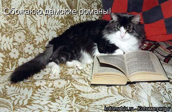 Котоматрица: Обожаюю дамские романы!