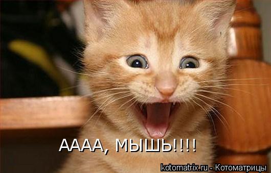 Котоматрица: АААА, МЫШЬ!!!!