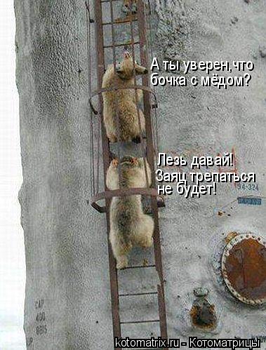 Котоматрица: А ты уверен,что бочка с мёдом? Лезь давай! Заяц трепаться не будет!