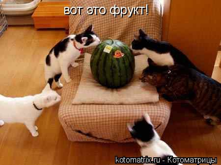 Котоматрица: вот это фрукт!