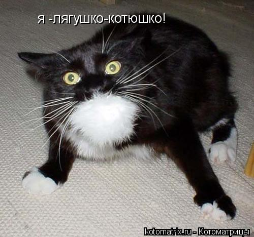 Котоматрица: я -лягушко-котюшко!