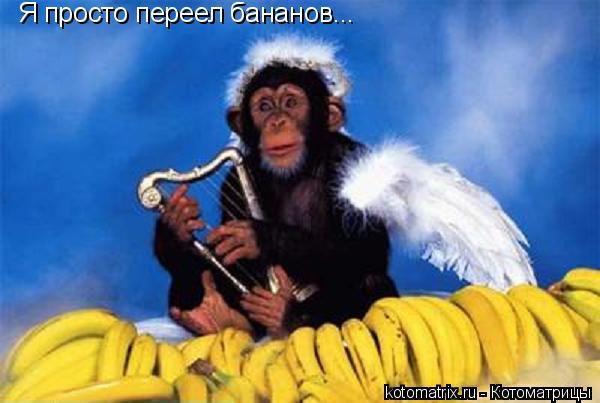 Котоматрица: Я просто переел бананов...