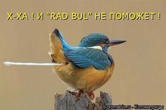 """Котоматрица: Х-ХА ! И """"RAD BUL"""" НЕ ПОМОЖЕТ !"""