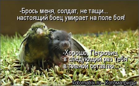 Котоматрица: -Брось меня, солдат, не тащи... настоящий боец умирает на поле боя! -Хорошо, Петрович,  в следующий раз тебя в пивной оставлю...