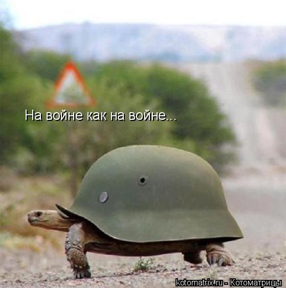 Котоматрица: На войне как на войне...