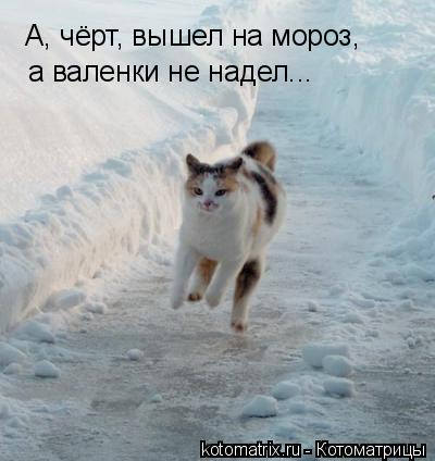 Котоматрица: А, чёрт, вышел на мороз, а валенки не надел...