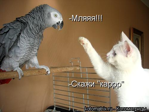 "Котоматрица: -Cкажи ""каррр"" -Мляяя!!!"