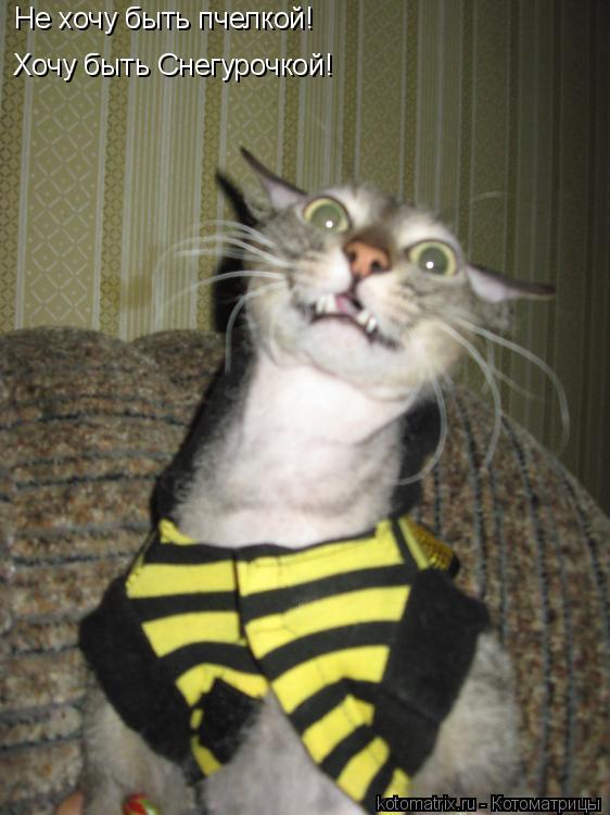 Котоматрица: Не хочу быть пчелкой! Хочу быть Снегурочкой!
