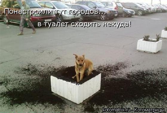 Котоматрица: Понастроили тут городов... в туалет сходить некуда!