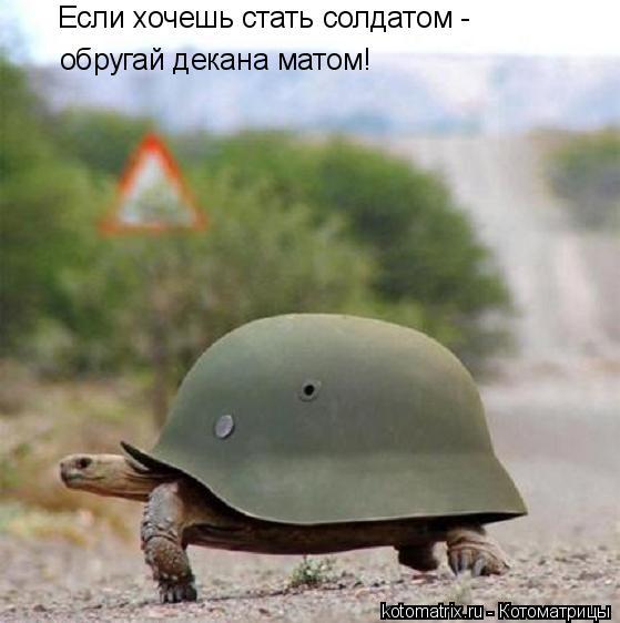 Котоматрица: Если хочешь стать солдатом -  обругай декана матом!
