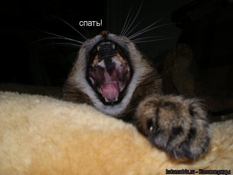 Котоматрица: спать!