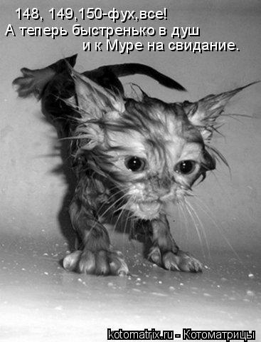 Котоматрица: 148, 149,150-фух,все! А теперь быстренько в душ и к Муре на свидание.