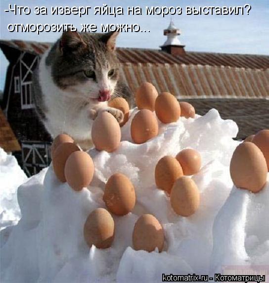 Котоматрица: -Что за изверг яйца на мороз выставил? отморозить же можно...