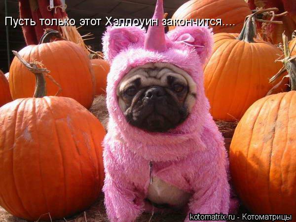Котоматрица: Пусть только этот Хэллоуин закончится....