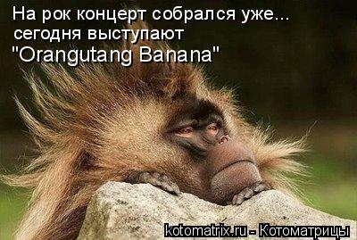 """Котоматрица: На рок концерт собрался уже... сегодня выступают """"Orangutang Banana"""""""