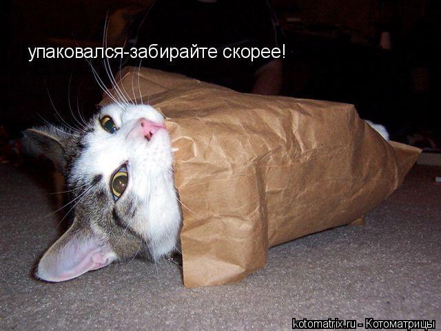 Котоматрица: упаковался-забирайте скорее!