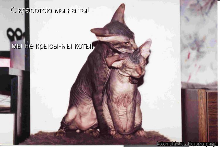 Котоматрица: С красотою мы на ты! мы не крысы-мы коты!