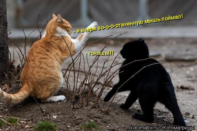 Котоматрица: - я вчера во-о-о-отакенную мышь поймал! - гонишь!!!