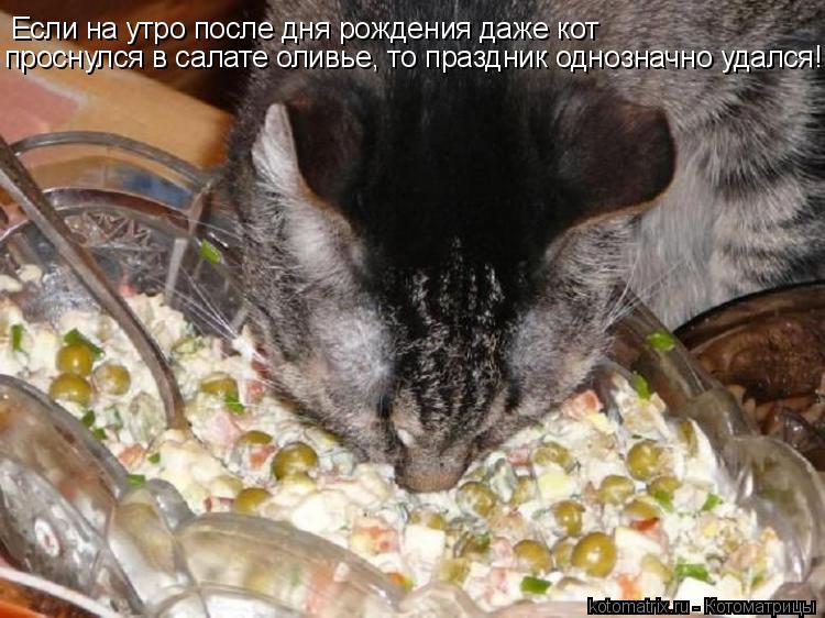 Котоматрица: Если на утро после дня рождения даже кот проснулся в салате оливье, то праздник однозначно удался!